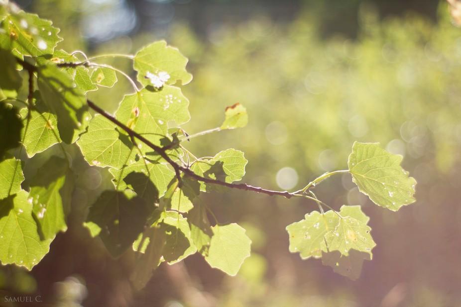 Leaves in peace
