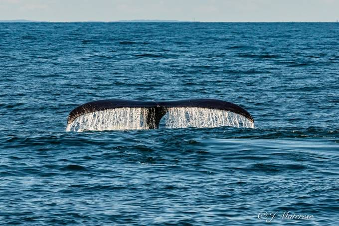 Whale Tail 3 3