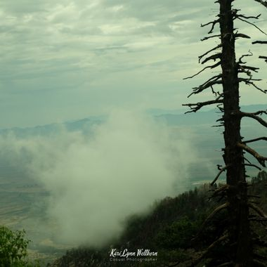 Mt Graham arrow tree with clouds