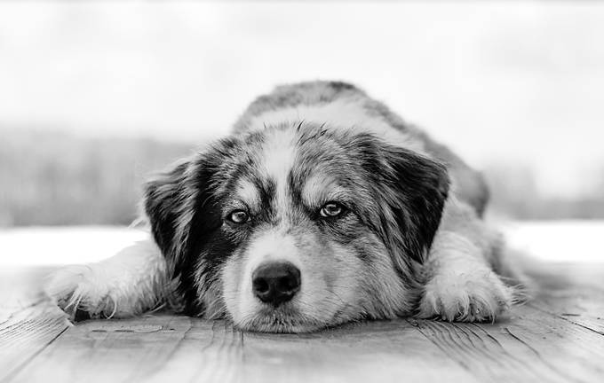 Duke by miniaussie - Our World In Black And White Photo Contest