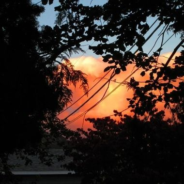 Looked up through the trees and it looked like the clouds were on fire.