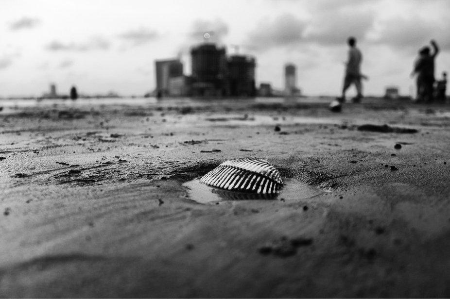 Shell of life