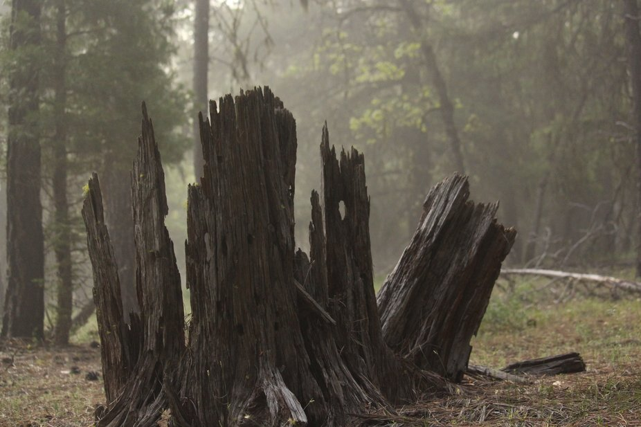 Taken in the shadows of the forest in the mountains of Burney, California.