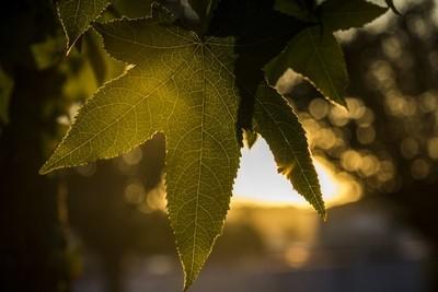 Natural Veins