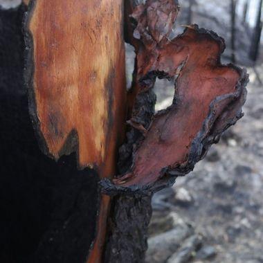 Underneath the Burn