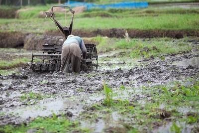 Bali_Paddy field worker_1