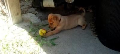 Inquisitive Pupper