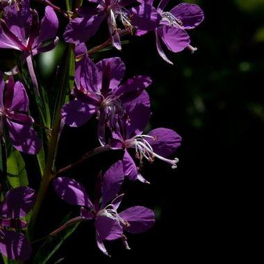 0P6A8698  wild flower