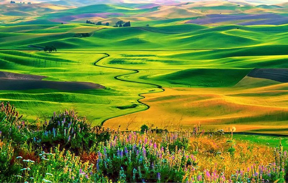 Palouse Country in Washington
