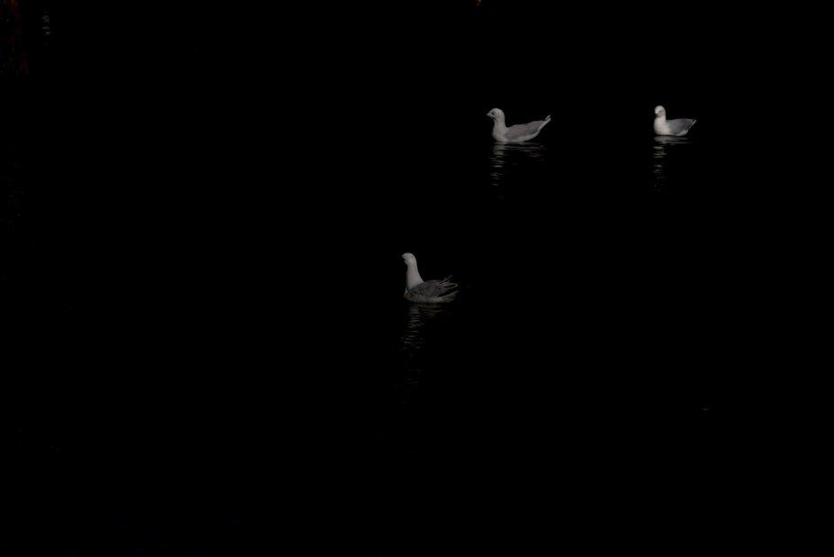 Seagulls relaxing