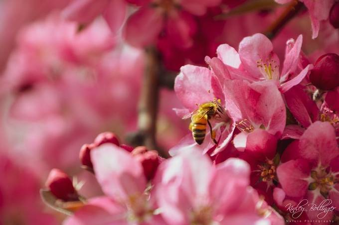 These busy bees were working hard at pollinating all of these wonderful flowers.