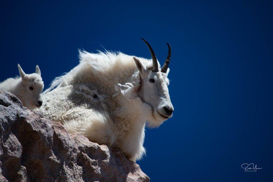 At the top of Mt Evans Colorado