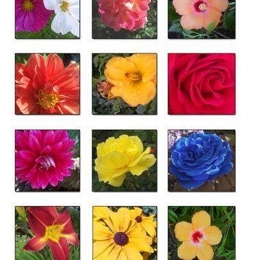Collection los colores de la naturaleza