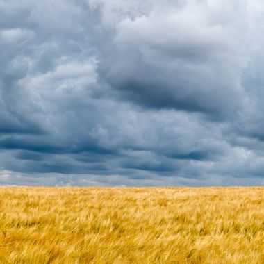 Storm clouds over crop.