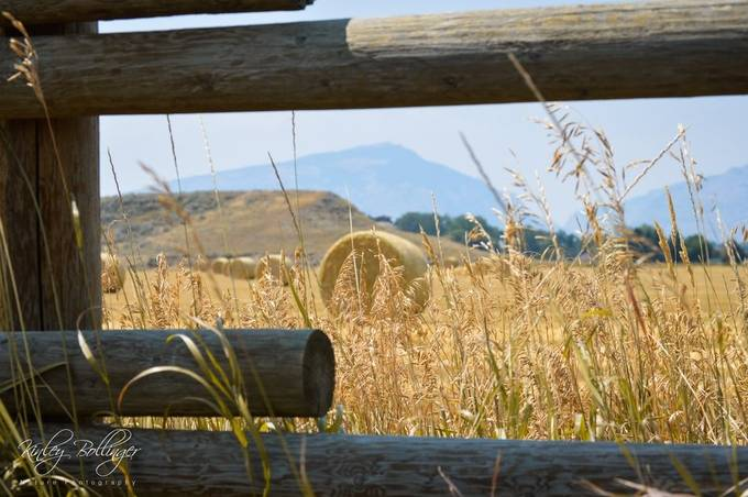 These hay bales made for a great picture in August.