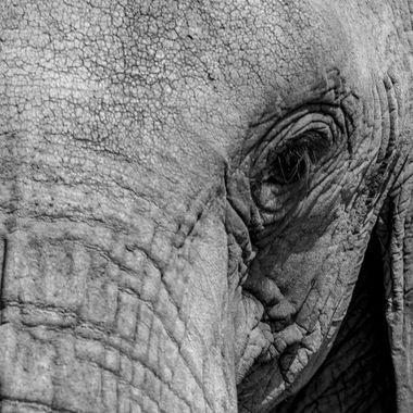 Samburo Elephant