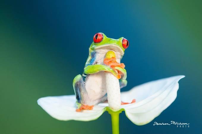 Singer by Barbora_Polivkova - Reptiles Photo Contest