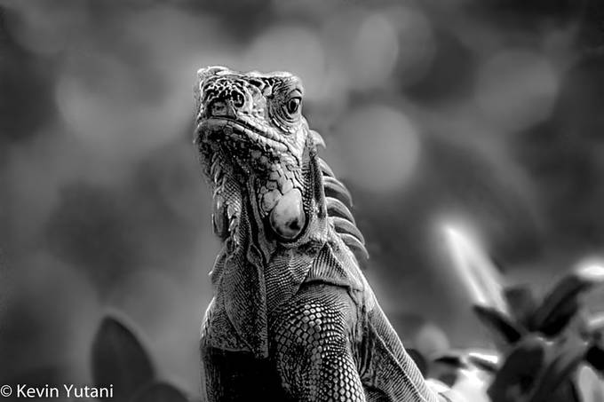 IMG_1803-Edit by Kyutani - Reptiles Photo Contest