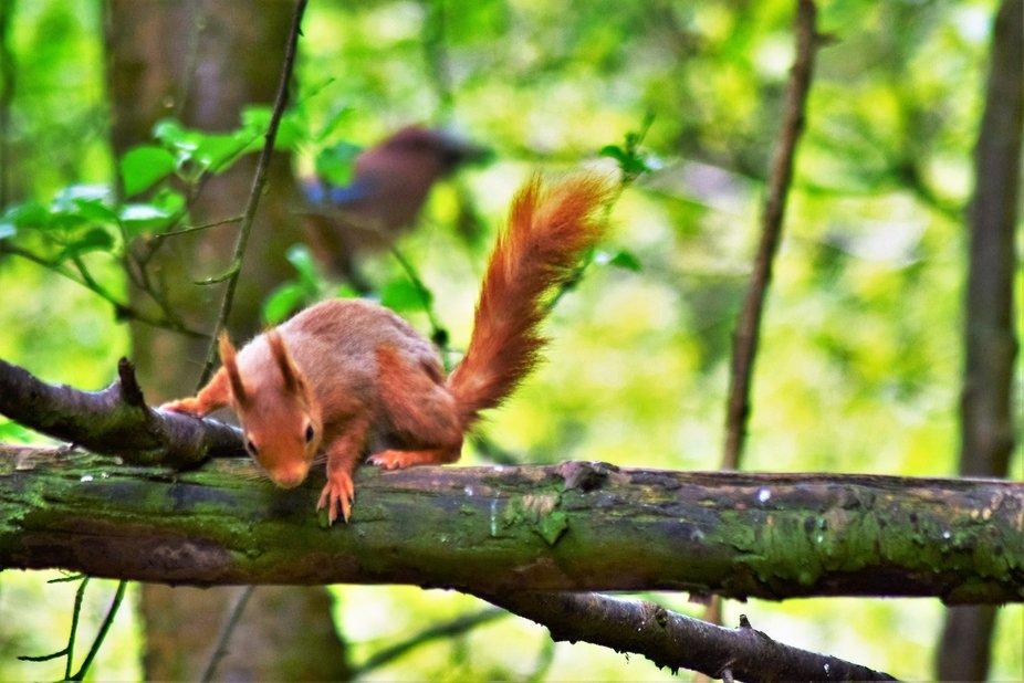 Taken in woodland in the Galloway region of Scotland.