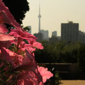 The Toronto skyline in the distance on a summer's day.  Pink petunias in the foreground with low exposure to enhance the shadows.  This photo w...