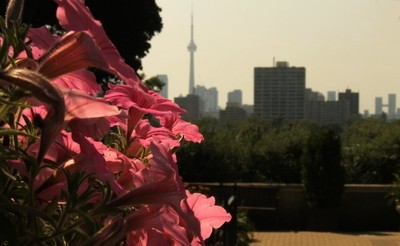Flowers and the Toronto Skyline