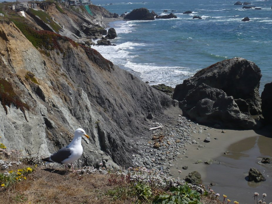 Beautiful Day. Bodega Bay. Me and the gull. just hanging out enjoying the moment. 2007