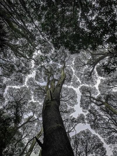 Canopy Gazing