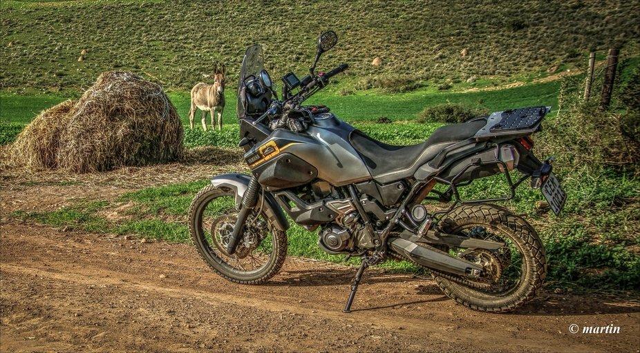 Bike & donkey