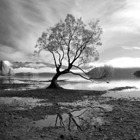 Lake Wanaka and the Wanaka Tree, South Island, New Zealand