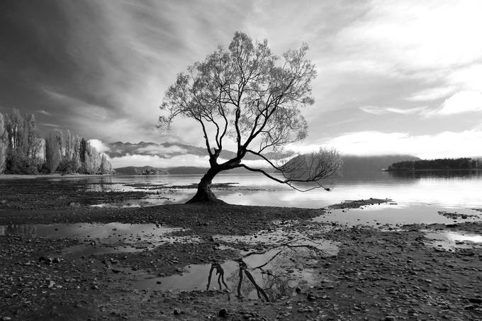 Lake Wanaka and the Wanaka Tree by JohnSmall - Our World In Black And White Photo Contest
