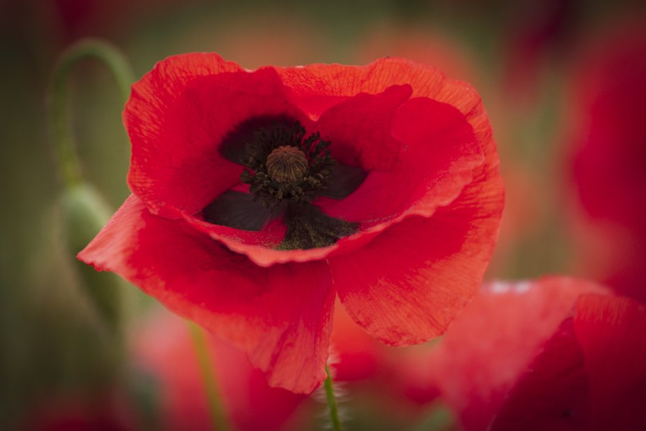 taken from a full field of poppies near my home in Doncaster