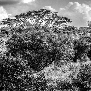 Narobi Landscape Black and White