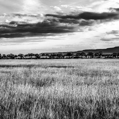 Grass and Escarpment in B and W