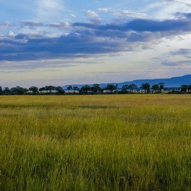 Mara Grass and Escarpment
