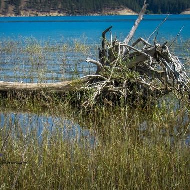 Tons of logs and trees laying on the ground or in the water. Barnaby Campground, Inchelium Highway, Inchelium, Washington