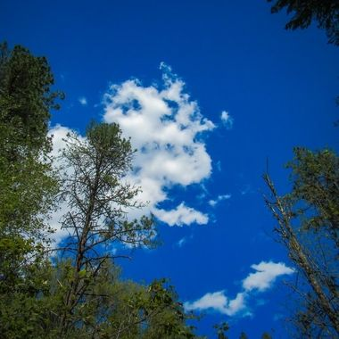 Looking up to see tree tops & clouds in a vibrant sky,