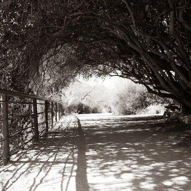 Boyce Thompson Arboretum 7