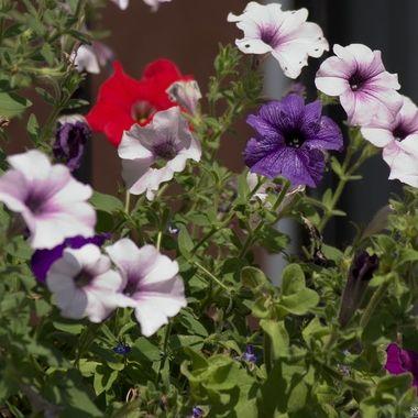 Various flowers in sunlight