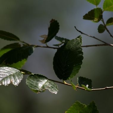 Leaves and stems in light and shadow