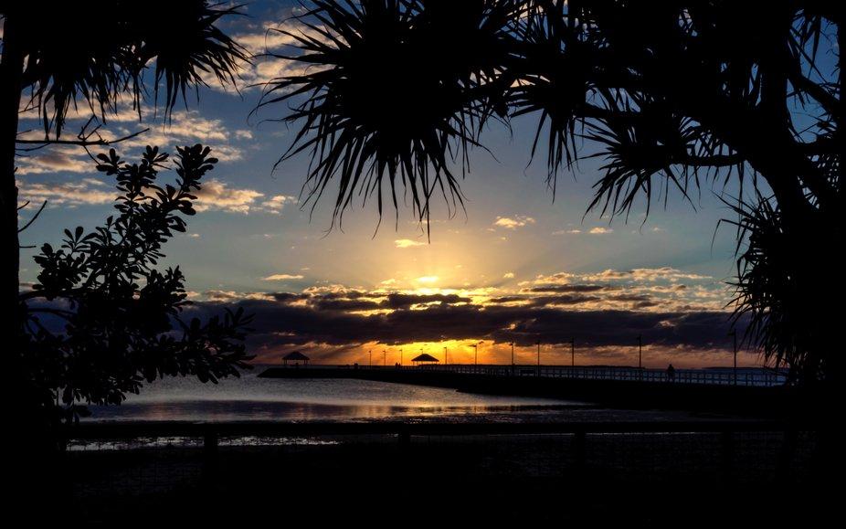 Looking towards Wynnum jetty through the pandanus palms at the Man made beach at Wynnum, Queensla...