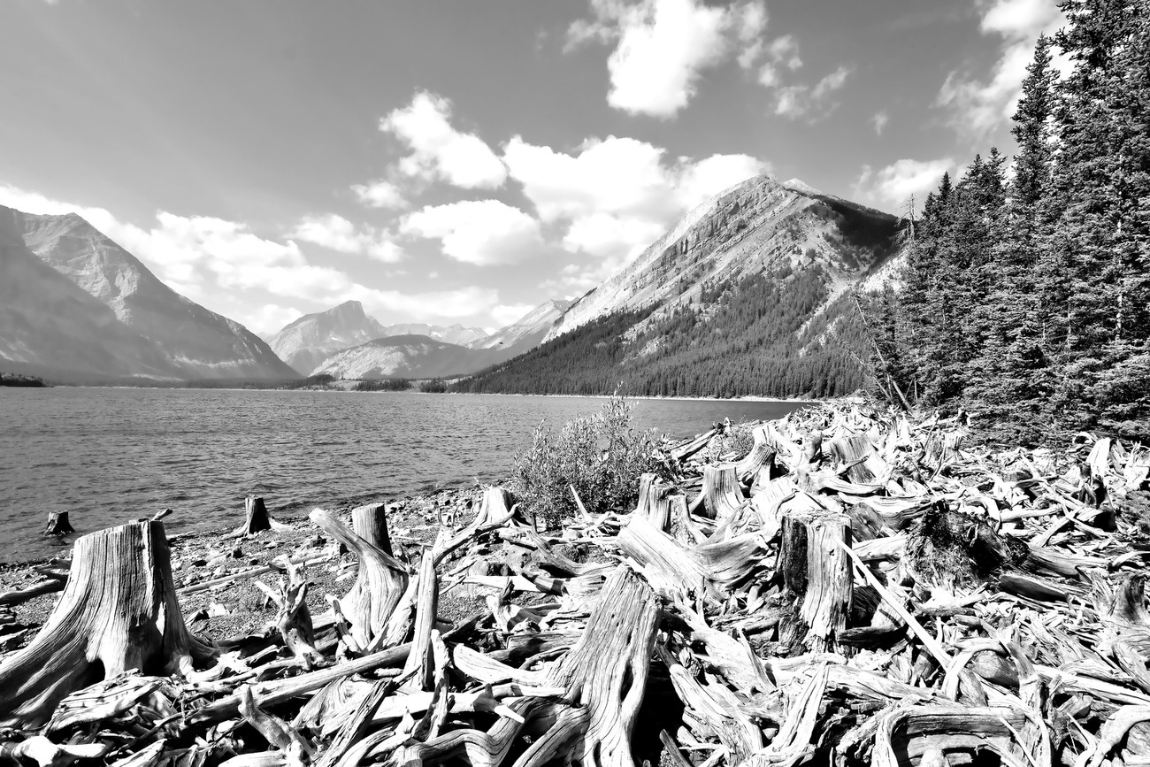 Upper Kananaskis Black and White