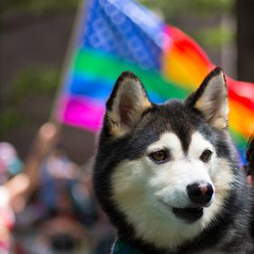 During the 2017 Charlotte Pride Parade, the perfect shot was captured as the Pride Rainbow flag passed behind the dog in front of me.  This adora...