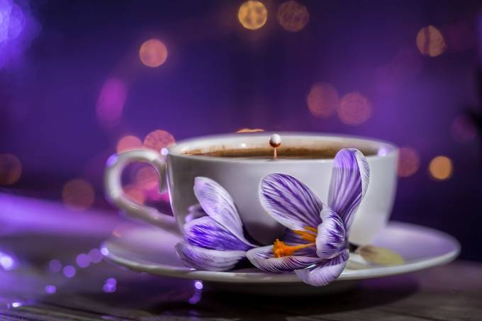 Spring Coffee by schevallier - Shades Of Purple Project