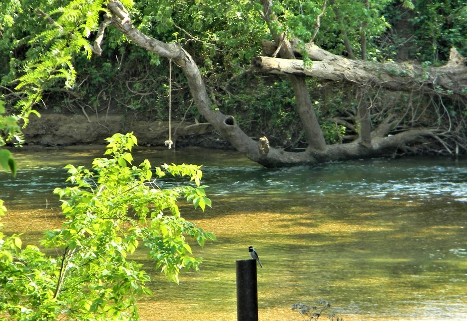 A fun spot on the Kings River near the mouth of the Osage River in Carroll County, Arkansas.  The rope added a reference for gravity,   Image was rotated a bit to allow the rope to hang straight down.  That added to the reality.  If the post was used for a reference, the image would not appear right.