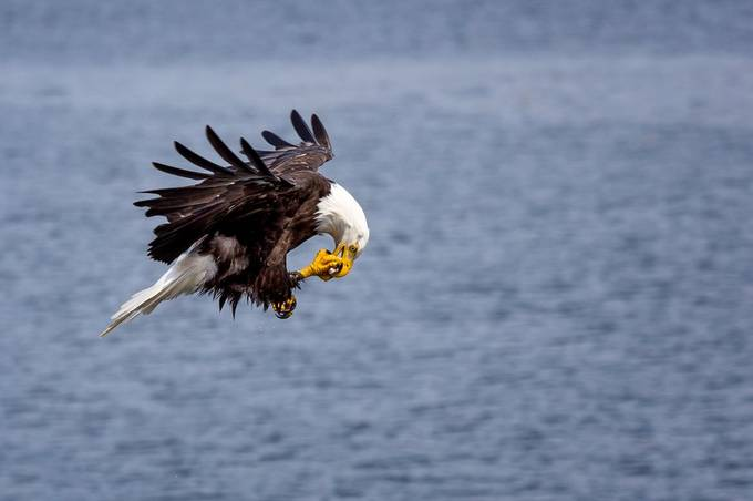 Eagle by JasonMc - Image Of The Month Photo Contest Vol 35