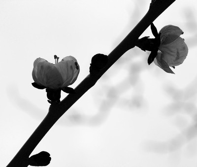 Simplistic Flower