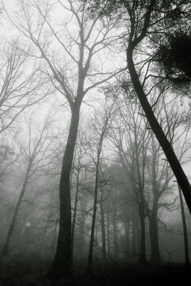 A foggy evening on Signal Mt. in TN