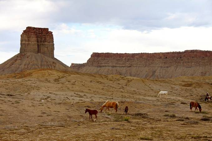 If you ever find your self driving through Cortez CO look for all the wild horses!