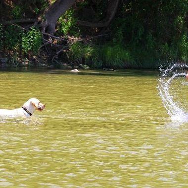 Splashing Pals