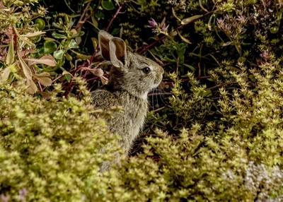 Bunny Benjamin